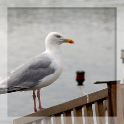 Seagull repellents