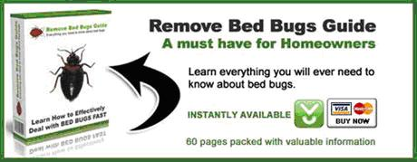 Bed bugs removal guide